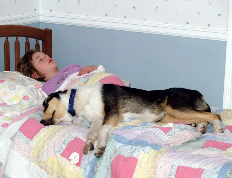 1000px-Girl_asleep_with_her_smooth_Collie
