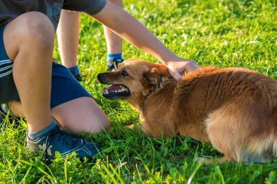 barn klapper hund truende