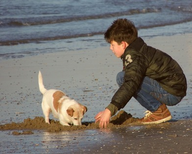 Sea Dog Play Beach Boy