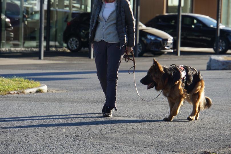 hundetrening i kongsberg 27.10.15 016