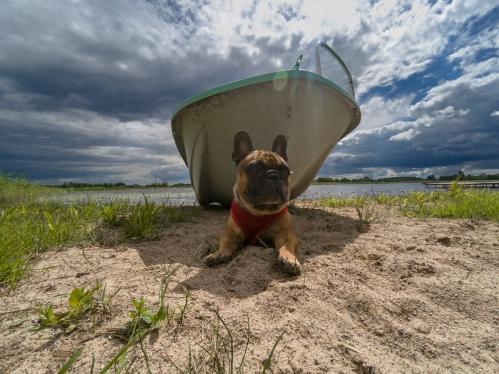 shutterstock_hund søker skygge undder båt